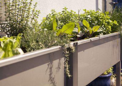 Achten Sie bei der Ernte darauf, mit der Schere nur die oberen Pflanzenstiele abzuschneiden. Wenn Sie circa 15 cm stehen lassen, treiben die Kräuter wieder neu und wachsen nach.