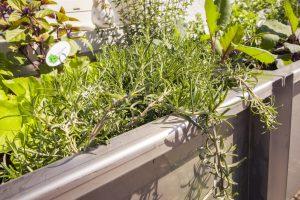 Ein Kräuter-Hochbeet benötigt eine warme, vollsonnige Lage. So gedeihen auch empfindliche, mediterrane Kräuter oder Gewürzpflanzen und trocknen bei Regen schnell ab.